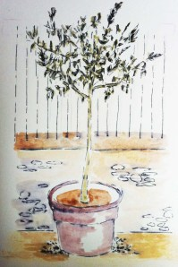 young_olive_tree